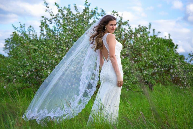 有长的飞行面纱的年轻美丽的新娘在开花的庭院里 库存图片