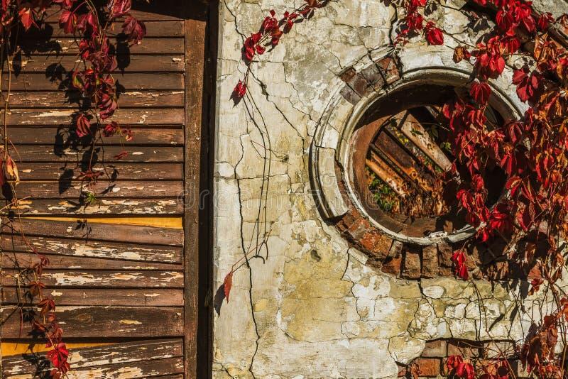 有门的老葡萄,背景墙壁和叶子  图库摄影