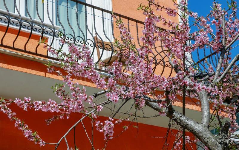 有阳台春天的议院在伊斯坦布尔 图库摄影