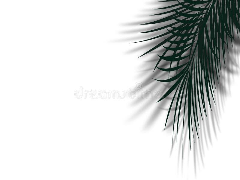 有阴影的棕榈树叶子在有拷贝的干净的白色墙壁上反射 库存例证