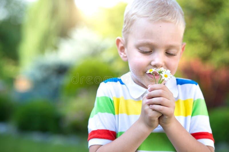 有雏菊花束的小男孩  库存图片