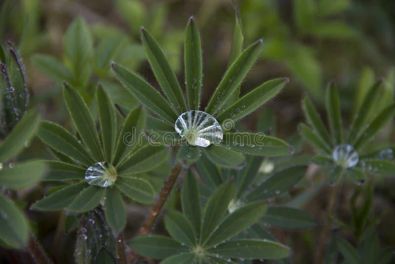 有雨下落的叶子 免版税图库摄影