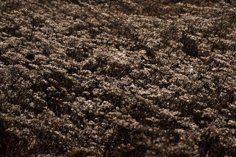 有雪和霜薄层的植物  图库摄影