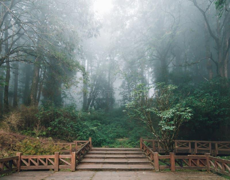 有雪松的木平台和雾在背景中在森林里在阿里山国家森林度假区在冬天 库存照片