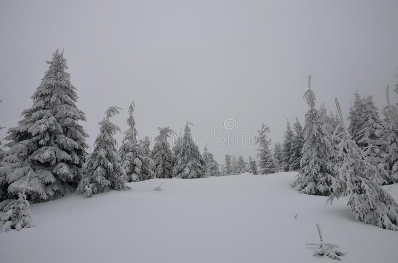 有雪的森林 免版税库存图片