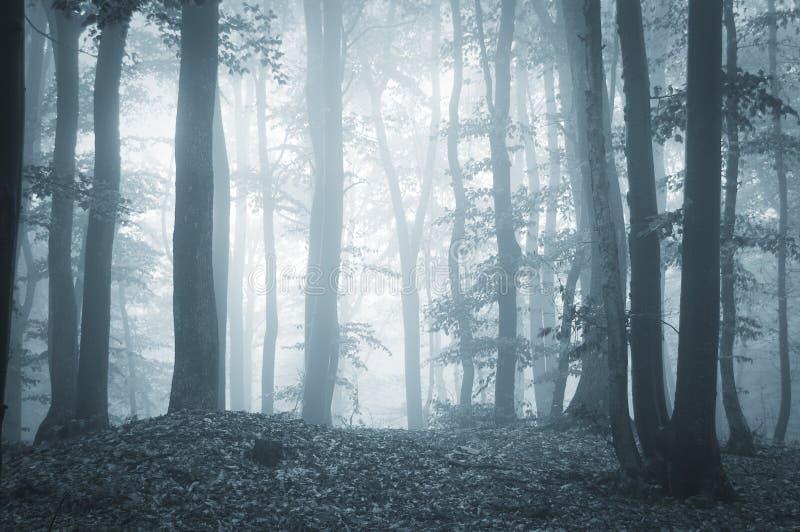 有雾和光的令人毛骨悚然的森林 免版税库存照片