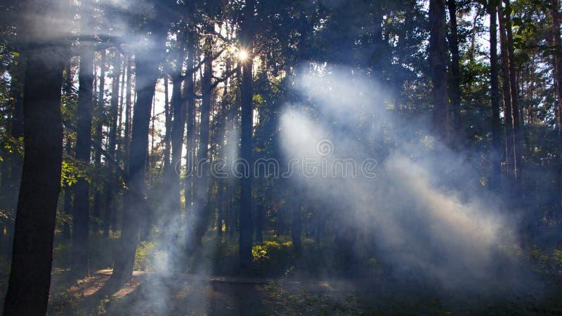 有雾和温暖的光的森林 库存照片