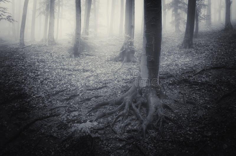 有雾和薄雾的可怕恐怖森林 库存照片