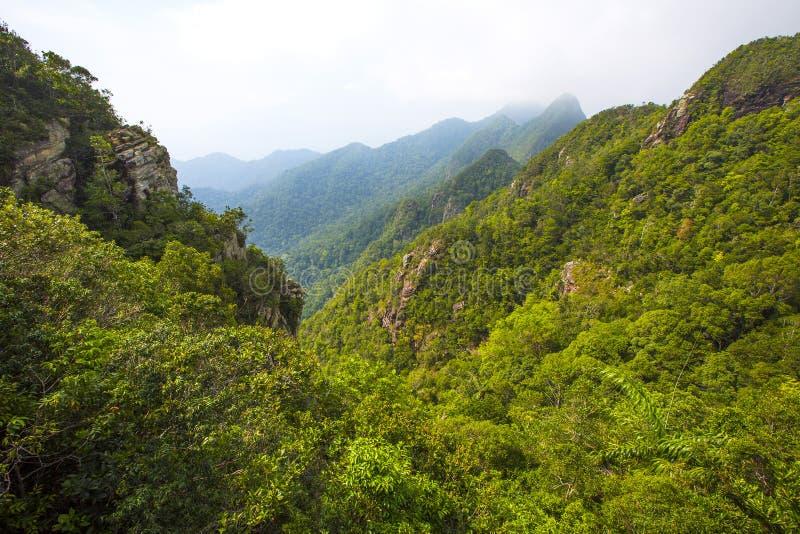 有雾和豪华的山风景在凌家卫岛在马来西亚 免版税库存照片