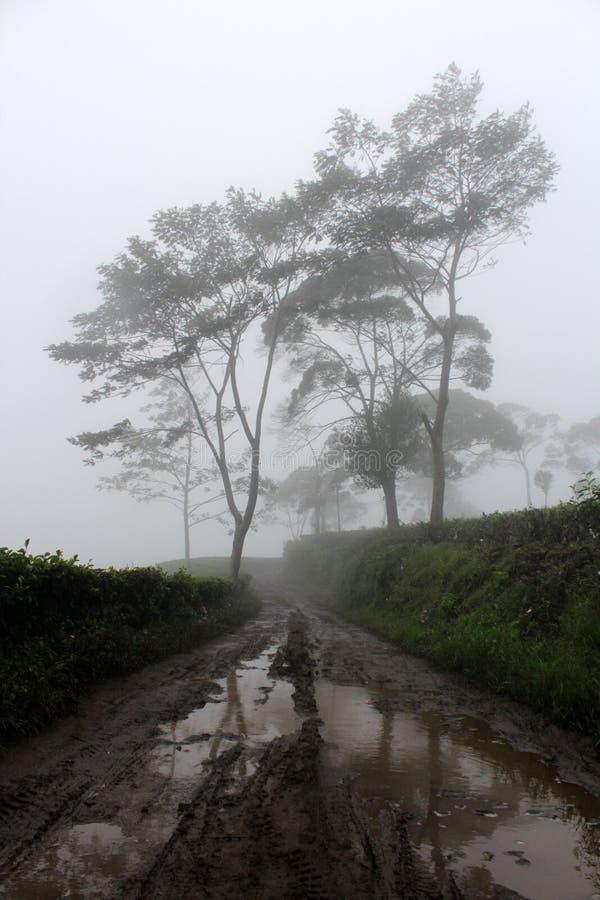 有雾在Sukawana自行车公园 免版税图库摄影