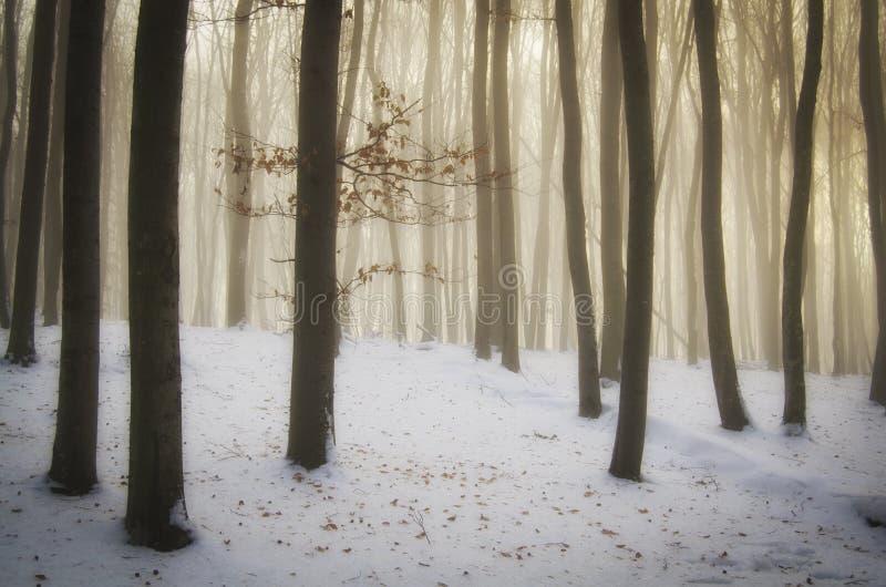 有雾的不可思议的圣诞节与神奇光的森林和雪 免版税库存照片