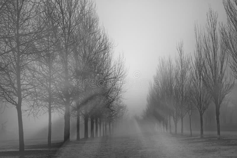 有雾的公园在冬天 库存图片