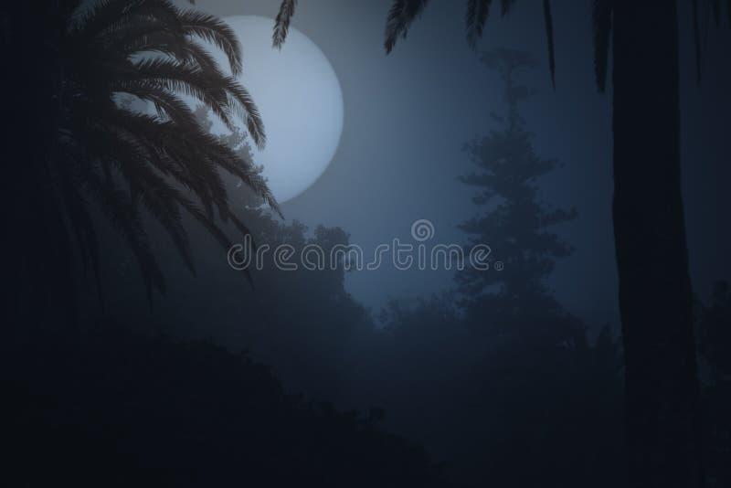 有雾的公园在晚上 库存照片