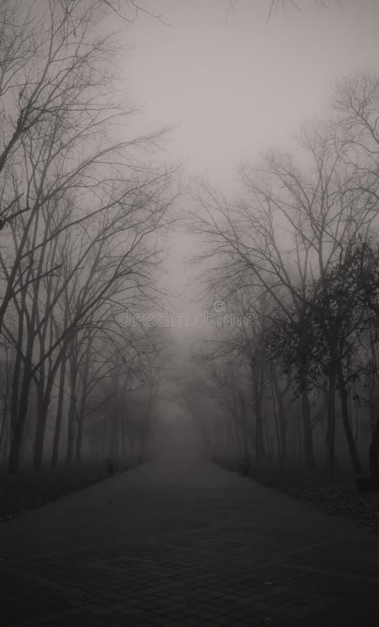 有雾的公园 库存图片