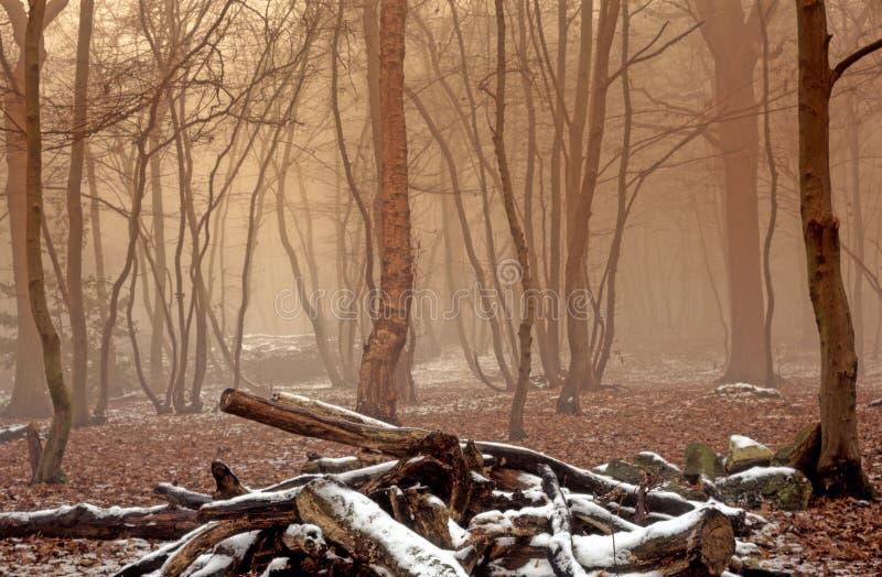 有雾的冬天森林地 图库摄影
