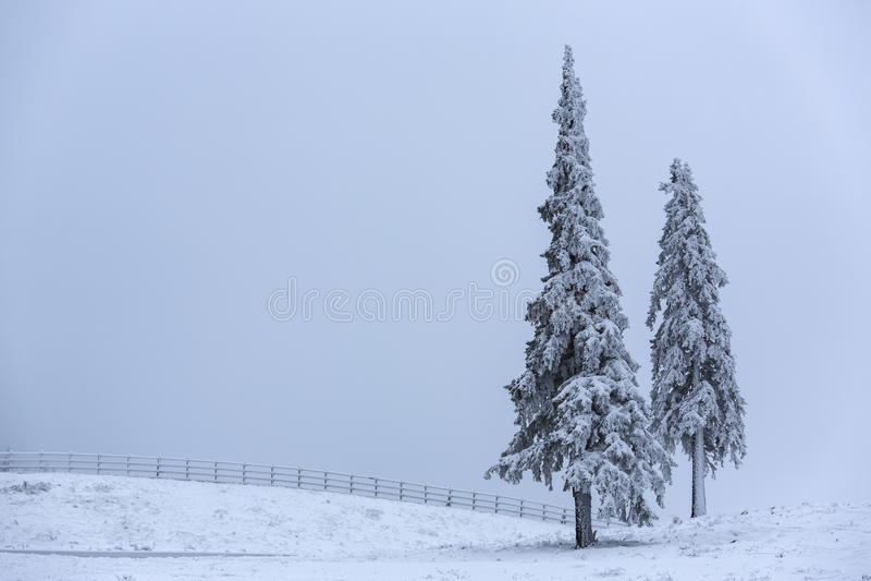 有雾的冬天横向 库存照片