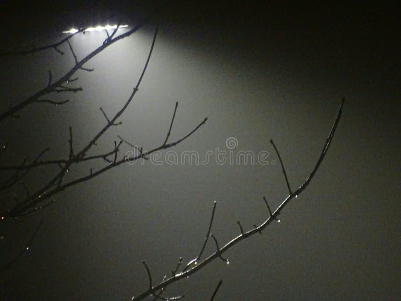 有雾的冬天街道照明背景 免版税库存照片