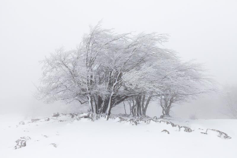 有雾的冬天风景在森林里 库存照片