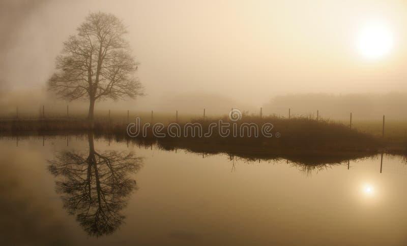 有雾的冬日在有反射在水中的孤立树的一个公园 免版税库存图片