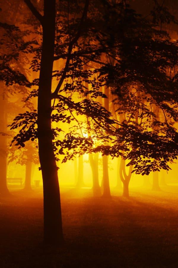 有雾的夜在公园 图库摄影