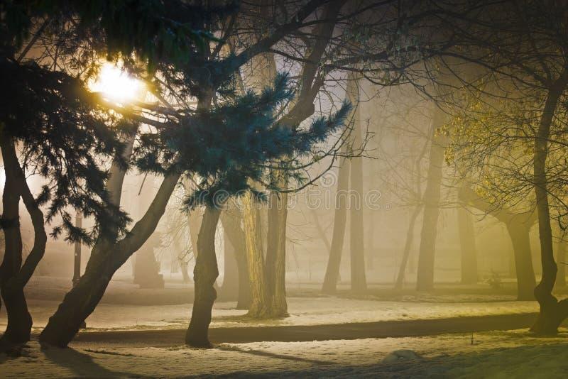 有雾的夜在公园 免版税图库摄影