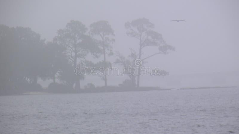 有雾的天在2月天 库存图片