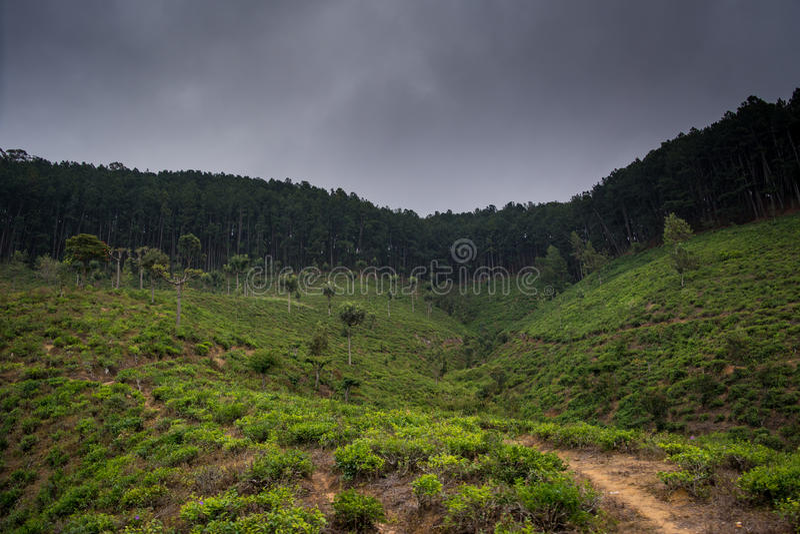 有雾的小山在斯里兰卡临近森林 图库摄影