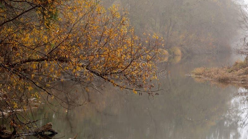 有雾的小河在秋天 免版税库存照片