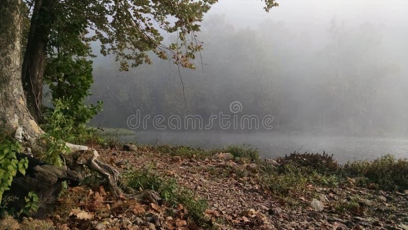 有雾的小河早晨 库存照片