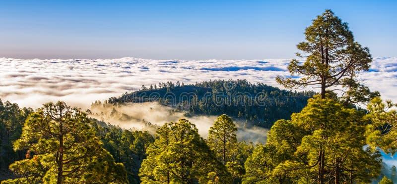 有雾的山令人惊讶的自然风景  自然的森林 地点:特内里费岛,加那利群岛 o : 免版税库存照片