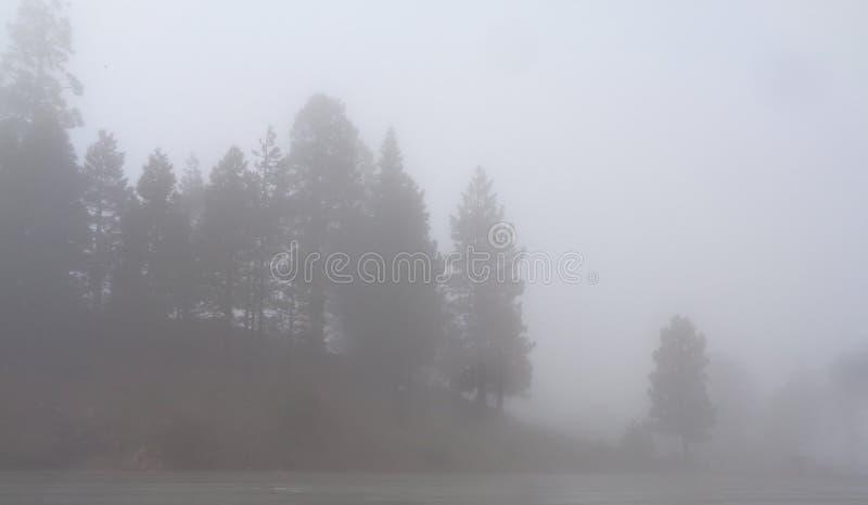 有雾的山松 免版税库存图片