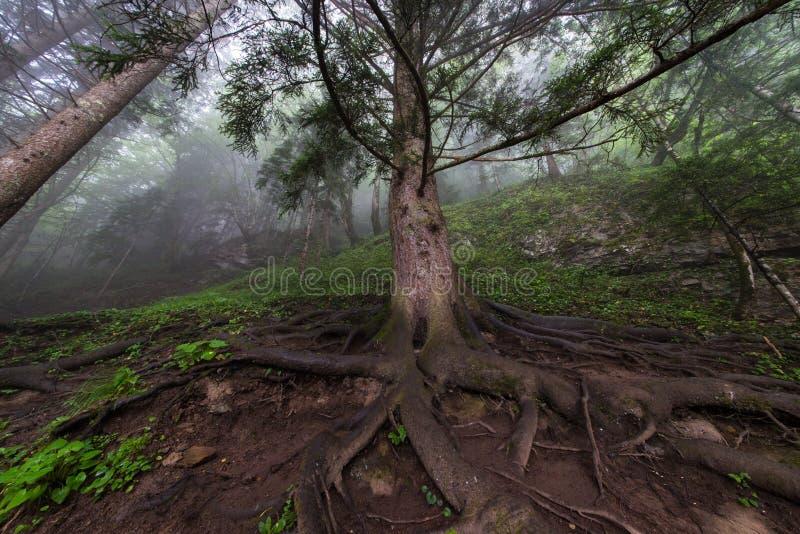 有雾的山 免版税库存照片
