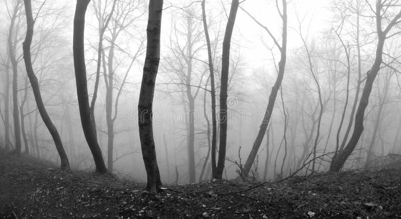 有雾的悬崖 免版税图库摄影