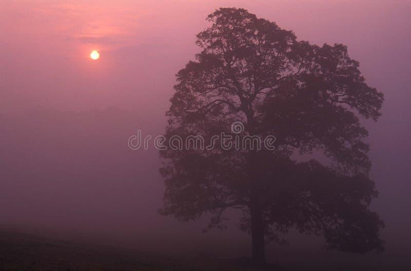 有雾的日出 库存照片