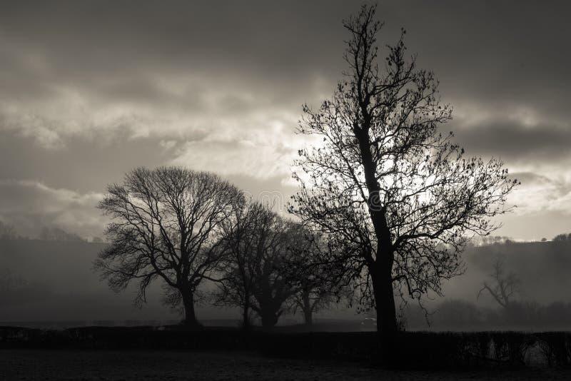 有雾的日 免版税库存图片