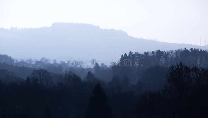 有雾的早晨森林 免版税库存图片