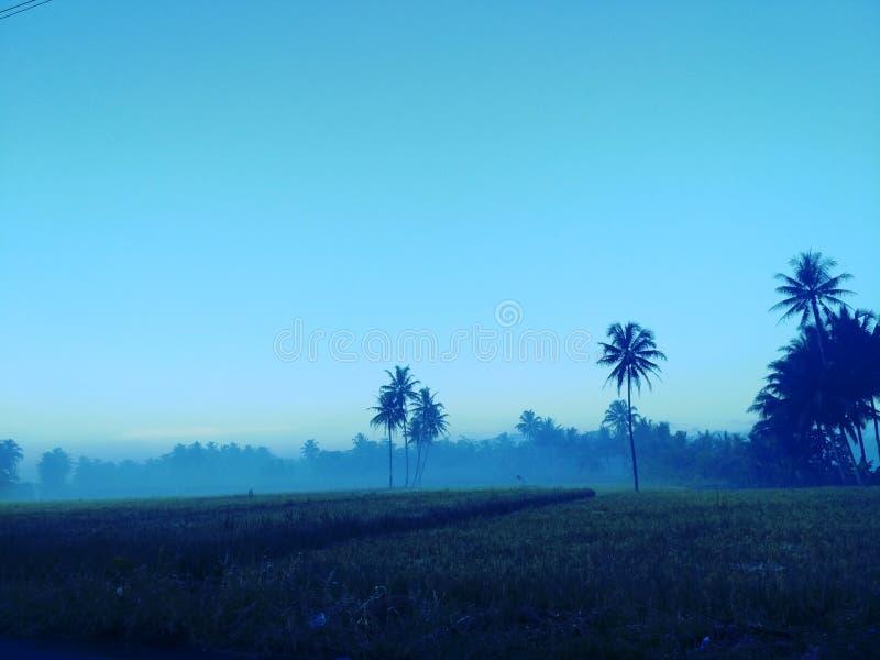 有雾的早晨 免版税库存照片