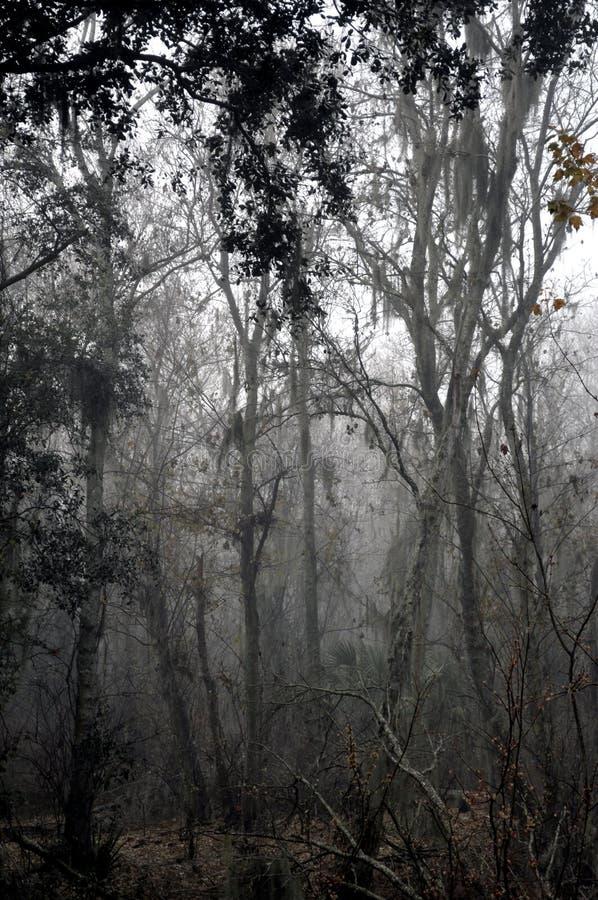 有雾的林木 库存图片