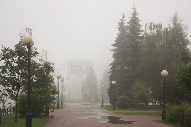 有雾的树在公园 库存照片