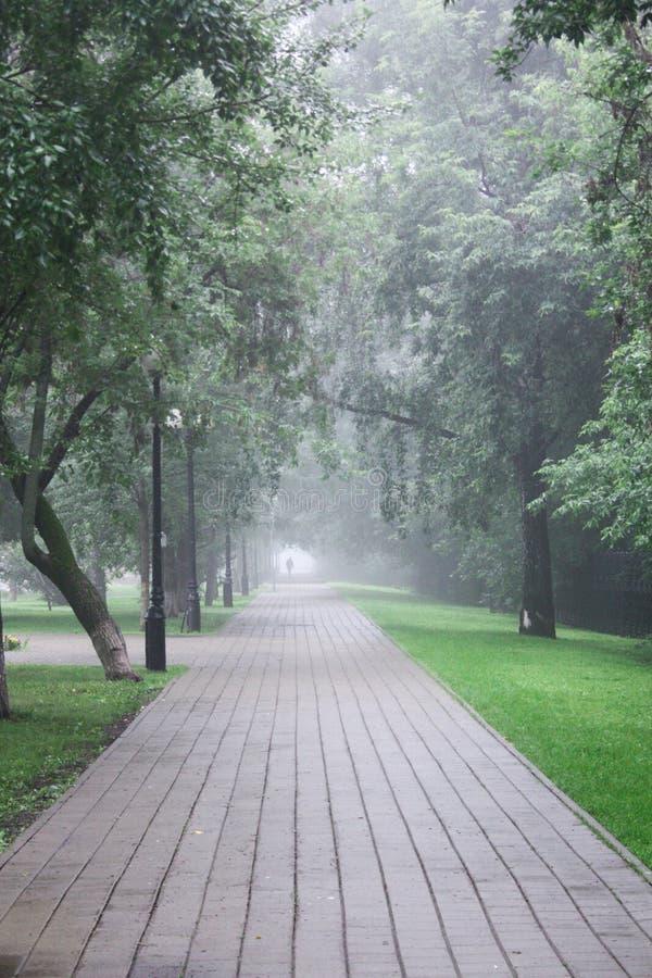 有雾的树在公园 免版税库存图片
