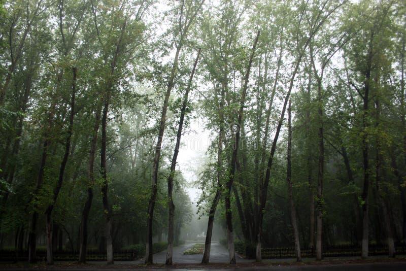 有雾的树在公园 库存图片