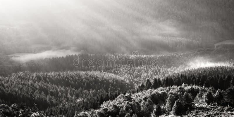 有雾的森林在早晨 库存图片