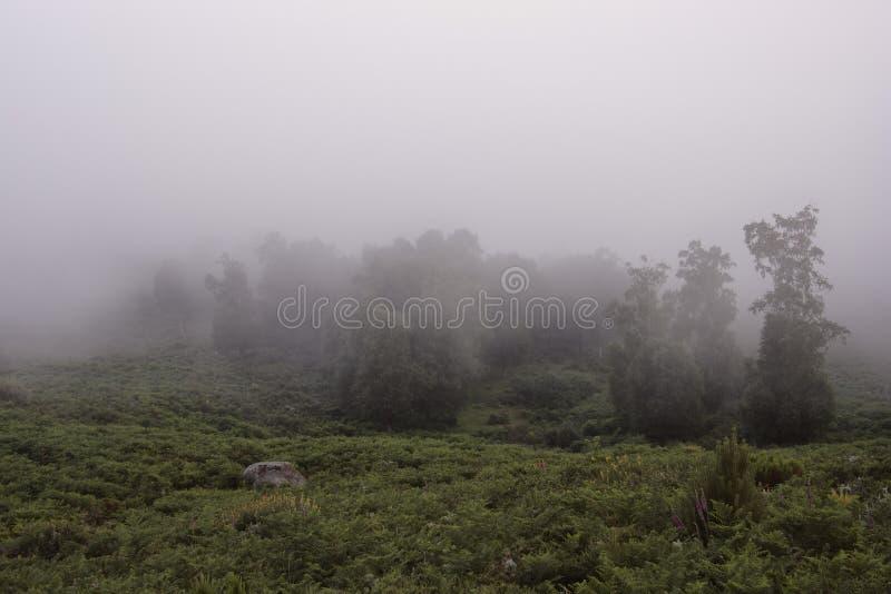 有雾的森林在黎明 免版税图库摄影