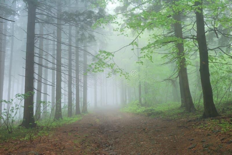 有雾的森林路径 免版税库存照片