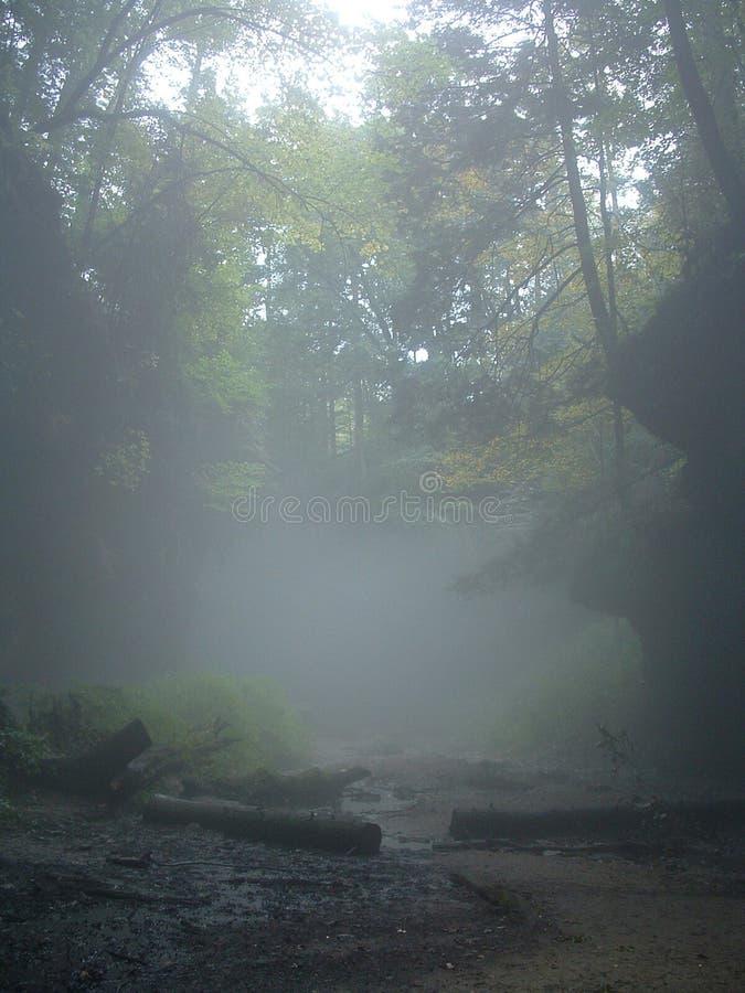 有雾的森林 免版税图库摄影