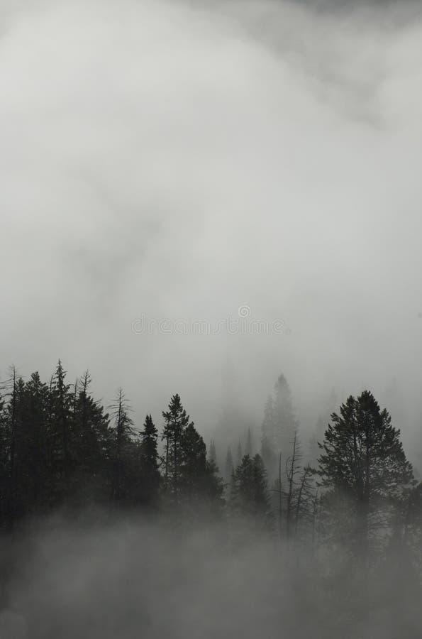有雾的森林 库存照片