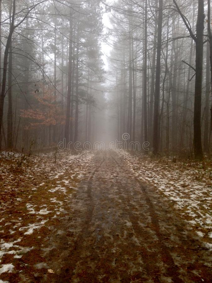 有雾的森林 免版税库存图片