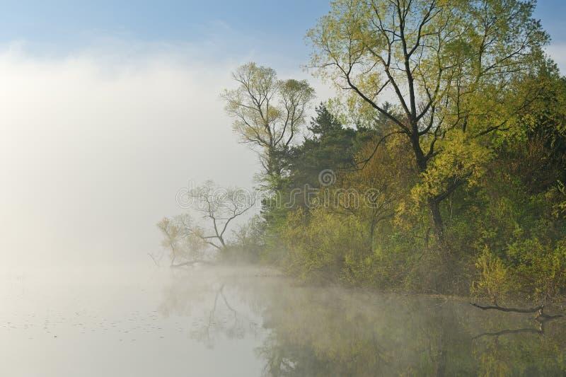 有雾的横向春天 库存照片