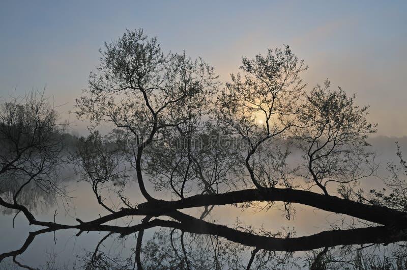 有雾的横向春天 免版税图库摄影