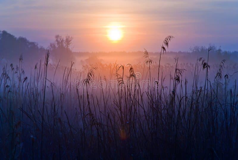 有雾的横向 在草甸的清早 免版税库存图片